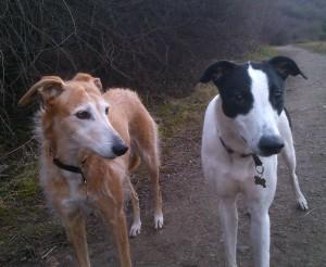 Tilly & Barry - Liaison clientèle & Chef de la sécurité